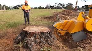 Stump Grinding Company Bruton Somerset