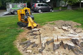 Tree Stump Removal Near Me Crewkerne Somerset